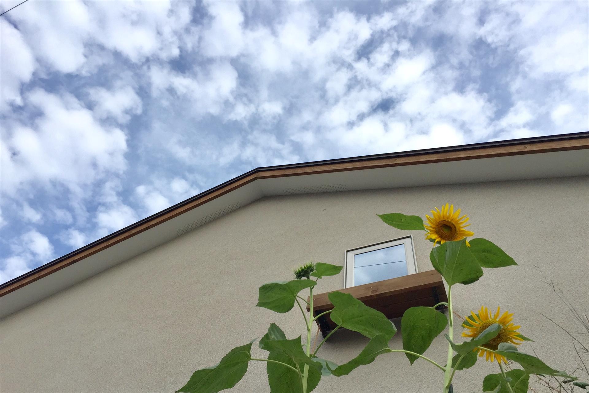 日向の家 外観/Mアトリエ